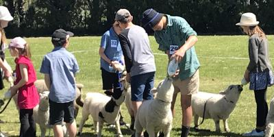 Lamb and Pet Day 2018